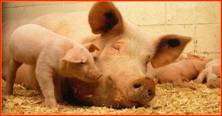 Τι σημαίνει το να τρως ζώα