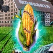 Τους βίγκαν τους χρηματοδοτούν οι πολυεθνικές των μεταλλαγμένων (όπως η Monsanto) για να πουλάνε περισσότερη μεταλλαγμένη σόγια.