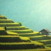 Ισχύει ότι οι φυτικές ζωοτροφές καλλιεργούνται μόνο σε άγονες εκτάσεις;