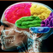 Ο μύθος της αύξησης εγκεφάλου του ανθρώπου λόγω κρεατοφαγίας