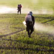Ισχύει ότι το κρέας είναι αγνό ενώ οι φυτικές τροφές έχουν χημικά και φυτοφάρμακα;