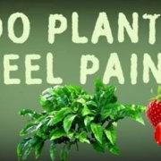Και τα φυτά υποφέρουν. Άρα το να τρως φυτά είναι το ίδιο με το να τρως κρέας!