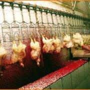 ΜΥΘΟΣ: Τα σφαγεία υποχρεούνται να διασφαλίζουν ότι τα ζώα δεν υποφέρουν