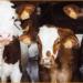 Το περιβαλλοντικό κόστος της κτηνοτροφίας