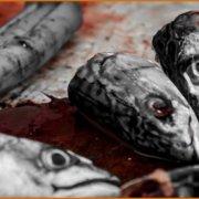Γεμάτα με βαρέα μέταλλα τα ψάρια που τρώμε