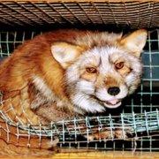 Θυσιάζοντας αθώα πλάσματα στο βωμό της μόδας