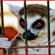 Ειδισμός ή σπισισμός και το κίνημα για την απελευθέρωση των ζώων