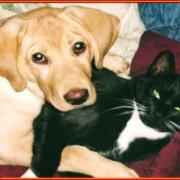 Μπορούν οι σκύλοι και οι γάτες να είναι υγιείς μόνο με φυτικές τροφές;
